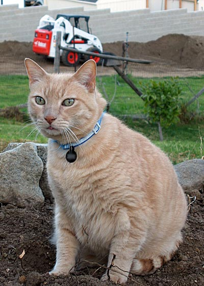 Bobcat Jeff