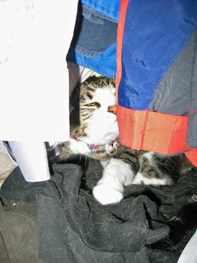 Norman in the closet