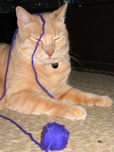 Jeff vs. purple yarn