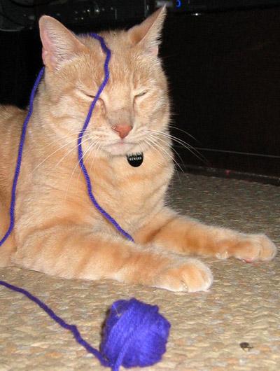 Jeff vs. purple yarn