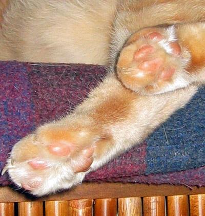 Jeff's feets
