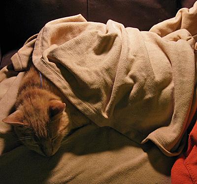 Jeff under blankets