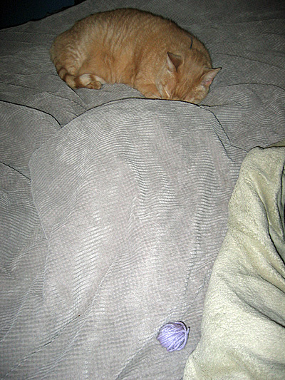 Jeff with Norman under blankets