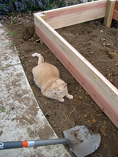 Jeff in raised garden bed