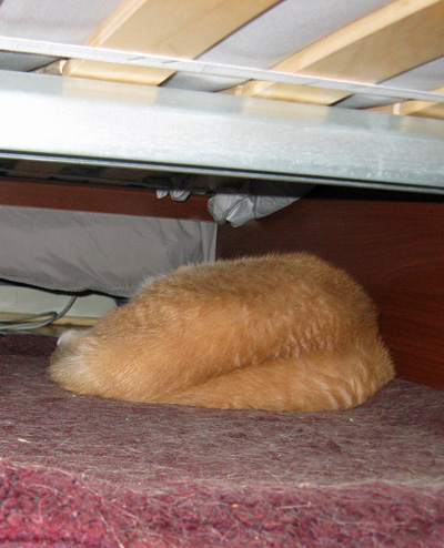 Jeff under the bed