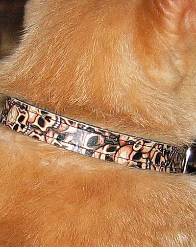 Jeff's new collar