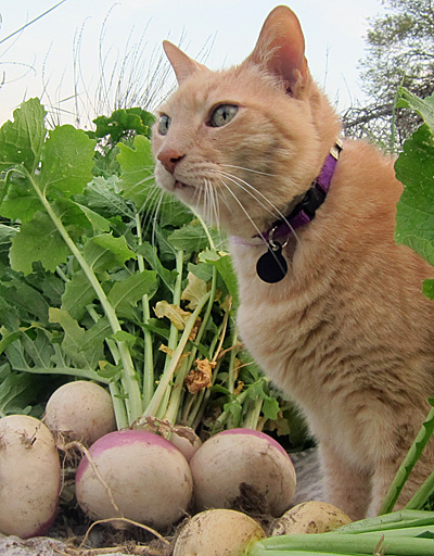 Jeff loves garden vegetables