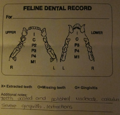 Jeff's dental report